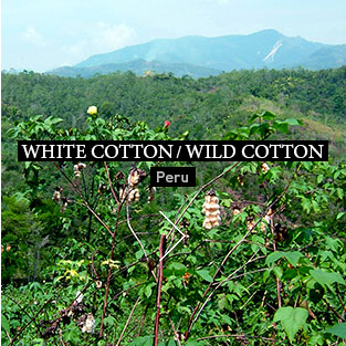 WHITE COTTON / WILD COTTON Peru
